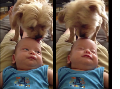 This Dog Has A Cute Way To Make His Little Baby Sleep. It's So Adorable