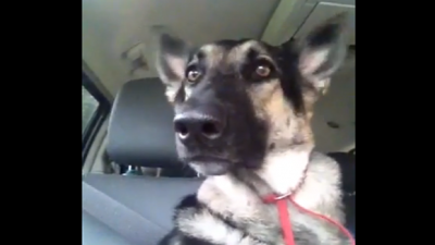 Dog Moves His Ears Precisely to the Beat of the Music. Be prepared to laugh!