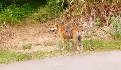 Unusual best friends: Dog carries orphaned monkey on his back.